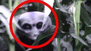 REAL Grey Alien Caught on Tape in Cornfield