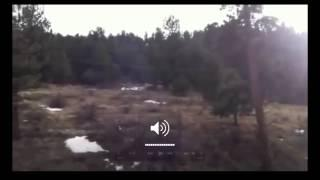 Bigfoot Sighting At Estes Park, Colorada Breakdown
