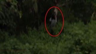 Ghost Standing Under Haunted Tree | Real Ghost Caught On Tape | Scary Videos