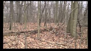 Multiple Bigfoot Sightings in Northern Michigan Breakdown
