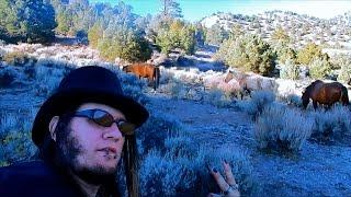 "Virginia City Hebrew Cemetery - Part 2 ""Walking With Wild Mustangs"""