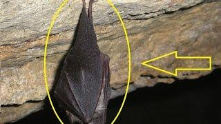 What ancient animals REALLY looked like Fossilized fur reveals color of 49 million year old bats