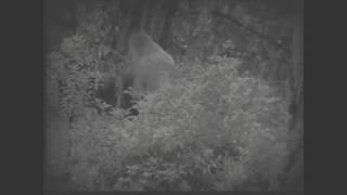 Bigfoot like creature in Florida