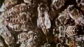 In Search Of... S01E06 5/01/1977 Killer Bees Part 1