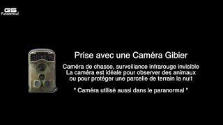 Gs Paranormal : Château Caméra Gibier