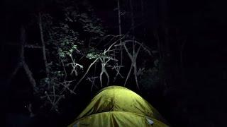 REAL Blair Witch Forest Haunted Suicide Forest