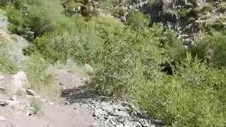 "Kings Canyon Nevada - Part 2 ""Into The Forest We Go"""