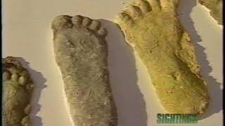 Sightings: Bigfoot in Ohio (9/16/95)