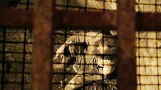 Creepy Haunted Castle, Plus EVP Session And Ghost Hunt.  Part 1