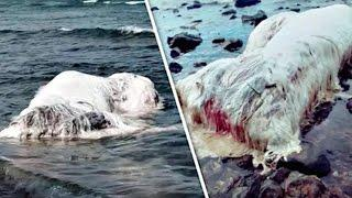 40 Foot Hairy Sea Creature Found On Coastal Shores Of Philippines