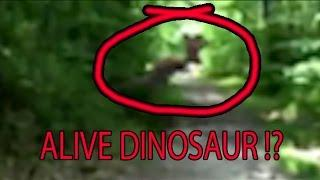 Alive Dinosaur Footage Zoomed and in Slow Motion. Are Dinosaurs Still Alive ? NEW 2016