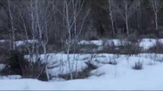 Bigfoot Sighting American Fork Canyon near Tibble Fork Reservoir Breakdown