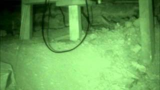 Example of Dust Orbs, St. Louis Paranormal Research Society
