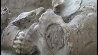 The 13 Alien Like Skulls Found in Mexico