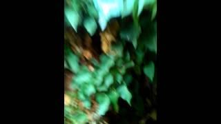 Στοιχειωμένο σπίτι στην Βέροια(trailer)