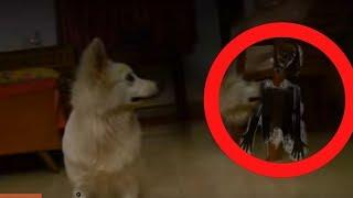 REAL GHOST ACTIVITY IN HAUNTED HOUSE | Real Ghost Caught on Tape