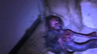 Body Of Dead Snake-Women Hybrid Scary Creature Photo (Part One) SCARY NEW REAL 2016