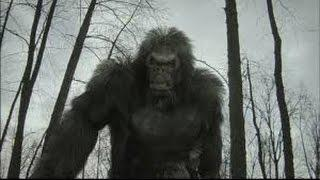Paranormal Phenomena - Bigfoot - THE GREATEST MYSTERY SOLVED