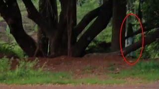 Paranormal Activity | Scary Videos | Ghost Videos | Real Ghost Sightings | Ghost Caught On Tape