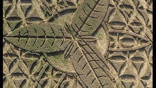 Crop Circle 12 de agosto, misterio resuelto