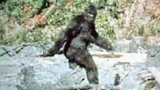 Bigfoot evidence!  Top 3 pictures that prove existence!