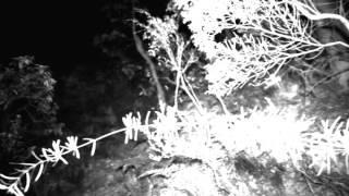 veryparanormal - In Tenebris episode 3 trailer