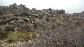Chloride AZ Rock Art