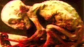 Паранормальные существа или игра природы, действие мутации. Необъяснимое!