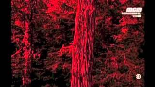 Paranormal Video  Le diable du new jersey