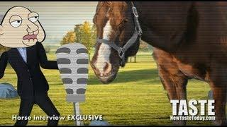 Horse Meat in Burgers: Interview With A Horse