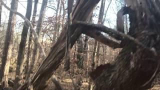 Camping Alone in Big Foot Territory Talladega National Forest Alabama Cryptozoology