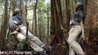 El bosque de los suicidios aokigahara - japón