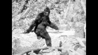 The Bigfoot Paterson Footage Could Be Real