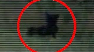 Werewolf caught on Tape  | Michigan Dog Man caught on Video | Sighting of Strange Creature NEW 2016