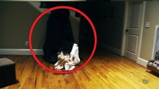 Mysterious Creature Compilation !! Shocking Haunted Ghost Attack Compilation, Scary Videos