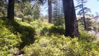 "Devils Lake - Part 2 ""Heavy Foliage"""