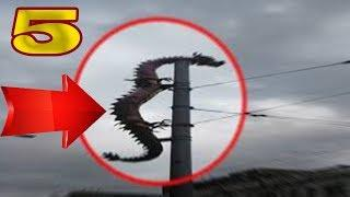 5 REAL DRAGON SIGHTINGS CAUGHT ON CAMERA & SPOTTED IN REAL LIFE