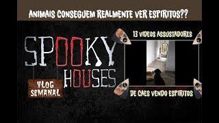 Análise Espiritual - 13 Vídeos Assustadores de Cães vendo Espíritos
