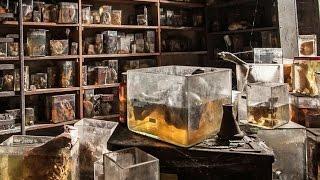 Old ghost haunted places in Belgium. Exploring abandoned Anderlecht Veterinary School Belgium