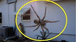 Monster Spiders Full Documentary HD