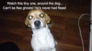 Ghost kids love my pets