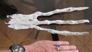 ALIEN HAND FOUND IN PERU [Creepy!]