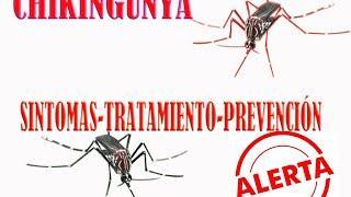 virus chikingunya [chikinguña] sintomas,tratamiento,prevención