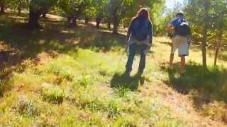 "Apple Hill - Part 4 ""On The Orchard Trail"""