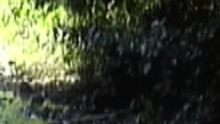Bigfoot Filmed at Bluff Creek California (2008)