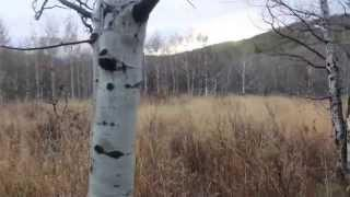 Bigfoot Sighting Alpine Loop Utah Send In