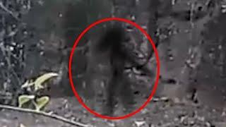 Real Satanic Story Of Ghost Hunt In Forest!! Ghost Caught On Tape!!