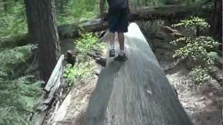 """Calaveras Big Trees Part 6 - """"Lord Rick Watch Out For That Tree"""""""