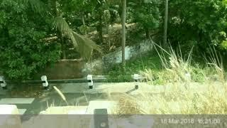 Ghost Black Shadow Captured On Mobile Near The Drainage!! Real Spirit Video Caught!!