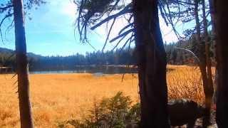 "Burnside Lake - Part 3 ""Into The Toiyabe Forest"""
